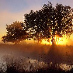 """фото """"Dawn Breaks Through"""""""