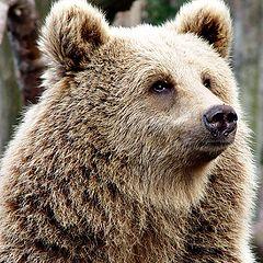 """photo """"teddy-bear"""""""
