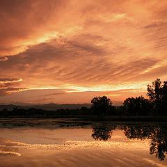 """фото """"Bronze Evening"""""""