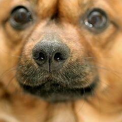 """фото """"про нос."""""""