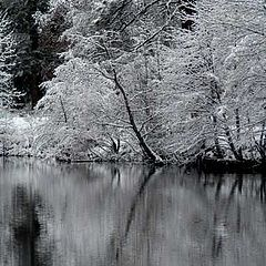"photo ""silent in white"""