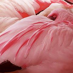 """фото """"Розовые сны"""""""