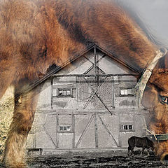 """фото """"Horses"""""""