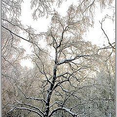 "photo ""Winter miniature"""