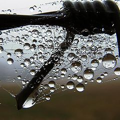 """фото """"Dew-drops"""""""