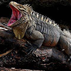 """фото """"На диком острове Lizard`s"""""""