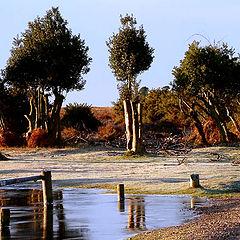 """фото """"Winter Landscape"""""""