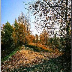 """фото """"Осень, осень..."""""""