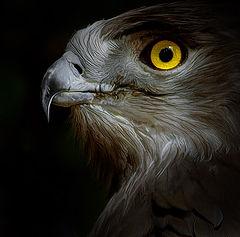 "фото ""PORTRAIT of a PROUD BIRD"""