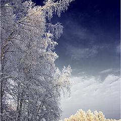 "photo ""Winter tales"""