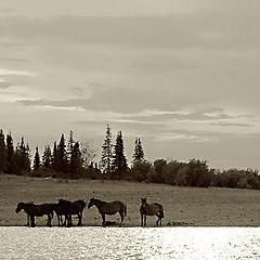 """фото """"ходят кони"""""""