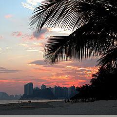 """photo """"Palm Beach"""""""