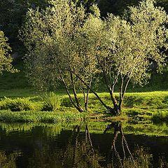 "фото ""Светлая лужайка, темная вода..."""
