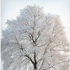 """фото """"Хрустальное дерево"""""""