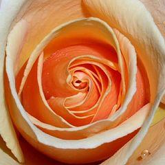 "photo """"Orange Swirl"""""