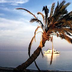 """фото """"Palm tree"""""""