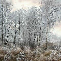 """фото """"Тропинка в зиму"""""""