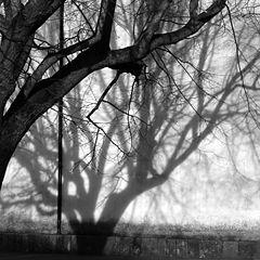 "фото ""Shadow"""