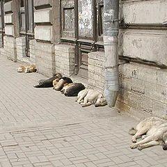 """фото """"Всем спать!"""""""