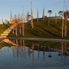 """photo """"Golden Pond"""""""
