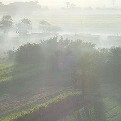"фото ""Morning mist"""