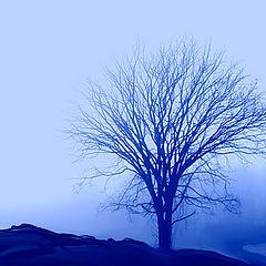 "photo ""Blue Echoes"""