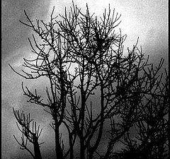 """фото """"Чёрная, чёрная ночь"""""""