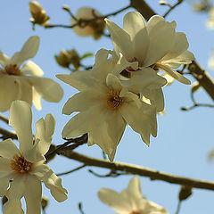 "photo ""Spring Has Come."""