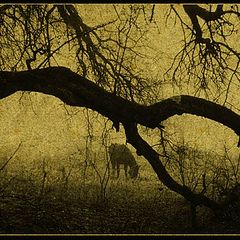 "фото ""The hors story # 2"""