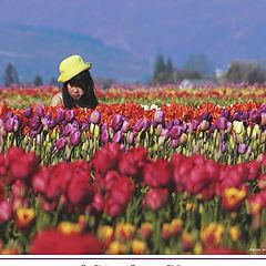 """фото """"A flower among Tulips"""""""