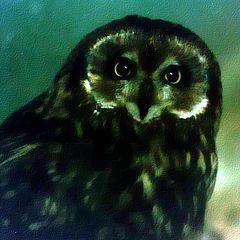 """photo """"Owl"""""""