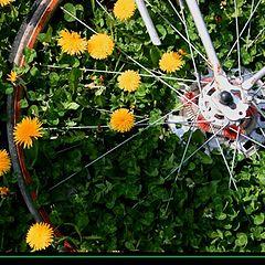 """фото """"...wheel...."""""""