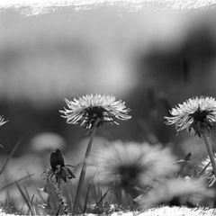 "фото ""Flowerdream"""