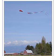 "фото ""Flight over Tulips"""