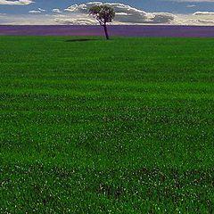 """photo """"Landscape"""""""