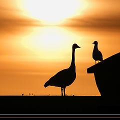 "фото ""Big Bird Little Bird"""