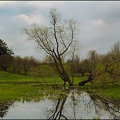 """фото """"Мокрая весна"""""""