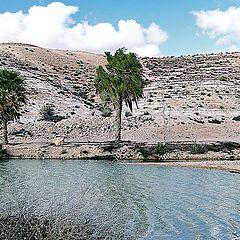 "фото ""Оазис. Пустыня Негев"""