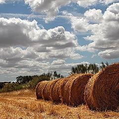 "photo ""straw colours"""