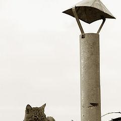 """фото """"про кота"""""""