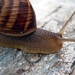"photo ""Snail"""