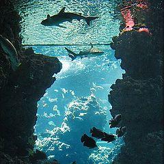 """фото """"Underwater world"""""""