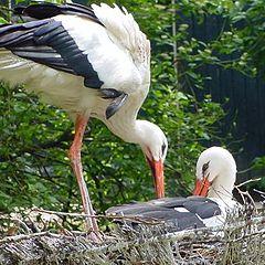 """photo """"A stork`s nest"""""""