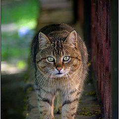 "фото ""Страшнее Кошки зверя нет или обход территории"""