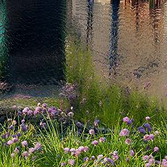 "photo ""Chelsea Flower Show 2004"""