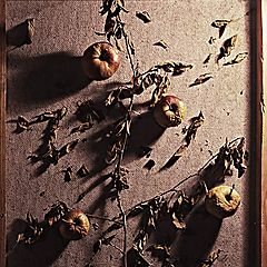 "photo ""In memory of apple tree"""