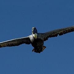 """фото """"wings-level flight"""""""