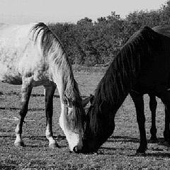 """фотоальбом """"Black & White"""""""