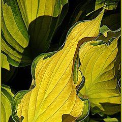 "photo ""Yellow sheet"""