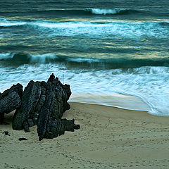 """фото """"On Your Shore...like a shell to the Ocean"""""""